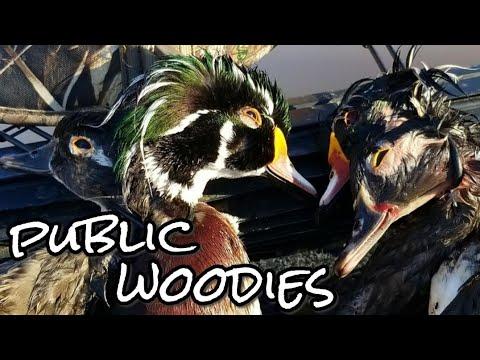 Wood Duck Hunt On Georgia Public Land