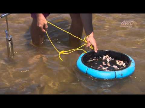 How To Catch Whiting With Yabbies