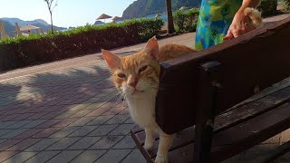 Ginger cat at the seaside road wants food and attention