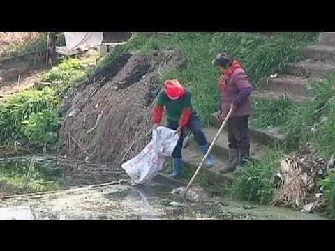 12 000 porcs malades jetés dans une rivière en Chine