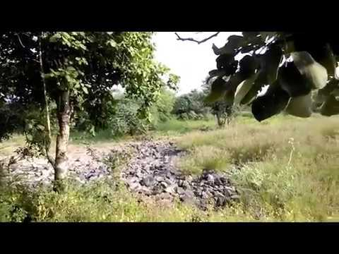 Gorewada Reserved Sanctury Nagpur