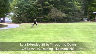 "1yo German Shepherd ""lola"" Before And After - Dog Trainers Raleigh Durham"