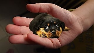 The tiniest dogs in the world - small dog breeds