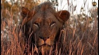 Pt 1 Safari Live's Sunrise Safari Drive at 6:30 AM on May 07, 2018 ( Avoca Male )