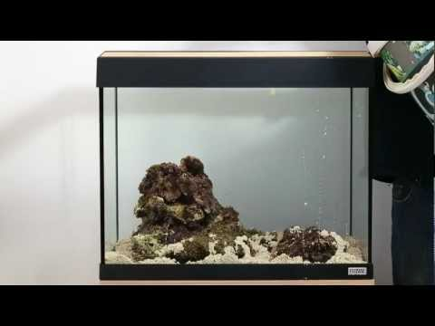 Converting to marine with Fluval Sea