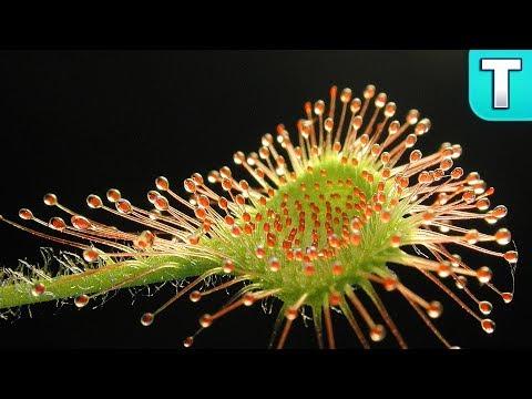 10 Carnivorous Plants You Won't Believe! Ep.1