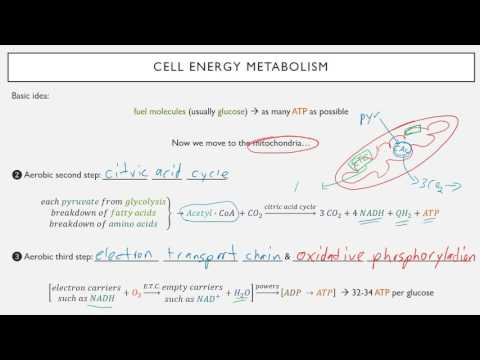 Cell Physiology Basics Mini-Lecture