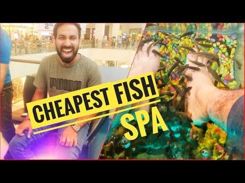 Cheapest Fish Spa II Fish Spa Chandigarh