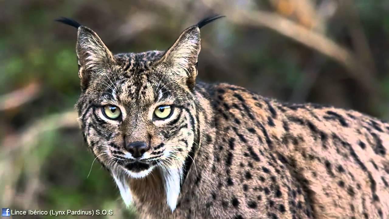 Fotos de animales de todo tipo incluyendo mascotas que más te gustan Maxresdefault