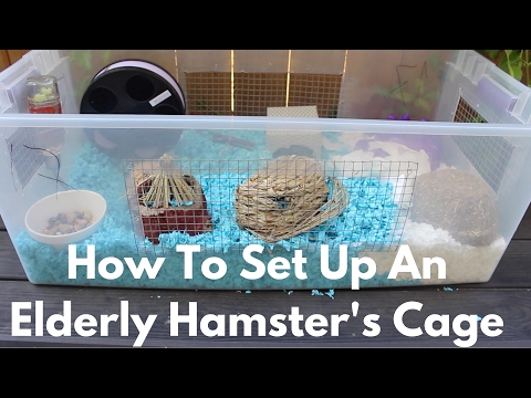 How To Set Up An Elderly Hamster's Cage