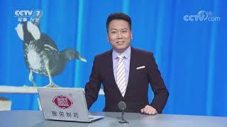 《农广天地》 20190521 负债累累 靠鸡生财| CCTV农业