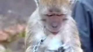 Doger Monyet / Topeng Monyet (Rafly Sunandar)