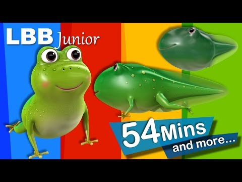 Life Cycle of A Frog Song | And Lots More Original Songs | From LBB Junior!
