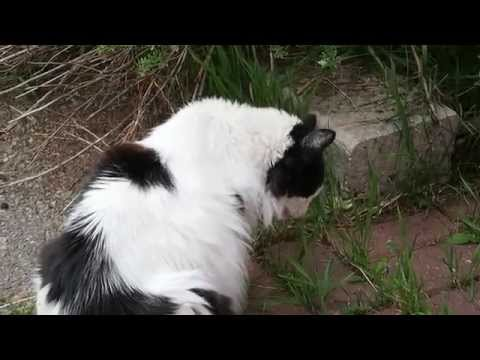 cat @ Pine Bungalows, Jasper