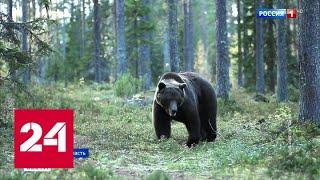 На Урале спасли мужчину, которого 6 часов преследовал медведь - Россия 24
