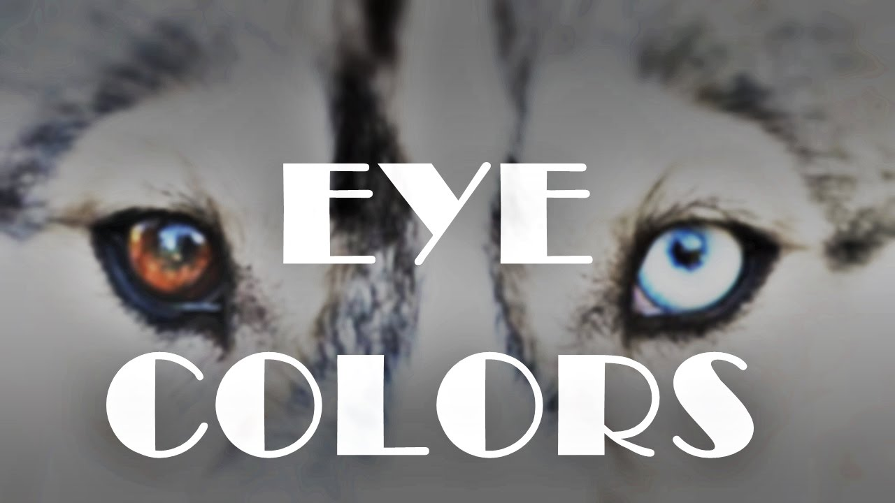 Siberian Husky Eye Colors All About The Different Types