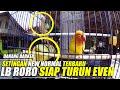 Lovebird Roro Makin Matang Usai Lockdown Siap Turun Event  Mp3 - Mp4 Download