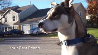 How to Make a Dog Your Best Friend