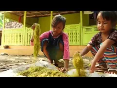 Children in Indonesia working on tobacco farms are put in health risk
