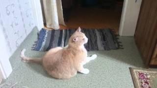 Кот встал не с той ноги