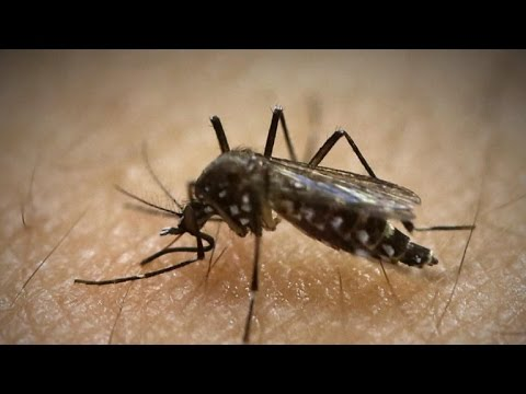 Florida Zika case my be first from mosquito inside U.S.