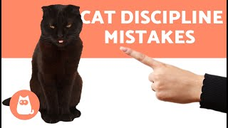 5 MISTAKES You Make When You DISCIPLINE a CAT ♂❌