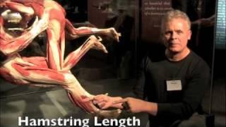 hip flexor complex physical games