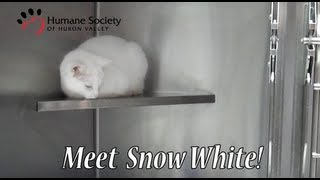 Meet Snowwhite, a pretty white cat with a sweet meow!