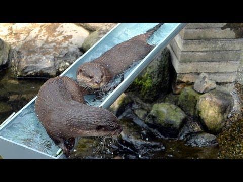 流しカワウソ はじめました 市川市動植物園