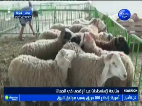 متابعة لاستعدادات عيد الإضحى في الجهات