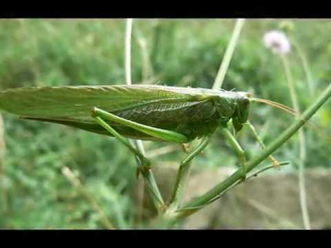 Кацнал бръмбар на трънка.wmv