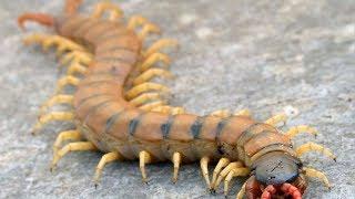 10 Insectes Les Plus Dangereux Et Meurtriers Du Monde