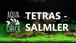 Salmler - Bunte Schwarmfische aus Südamerika