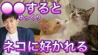 ●●すると寄ってくる!猫に好かれる表情がこちら