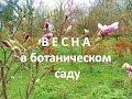 Ботанический сад в Калининграде.  Весна.  Вивальди.