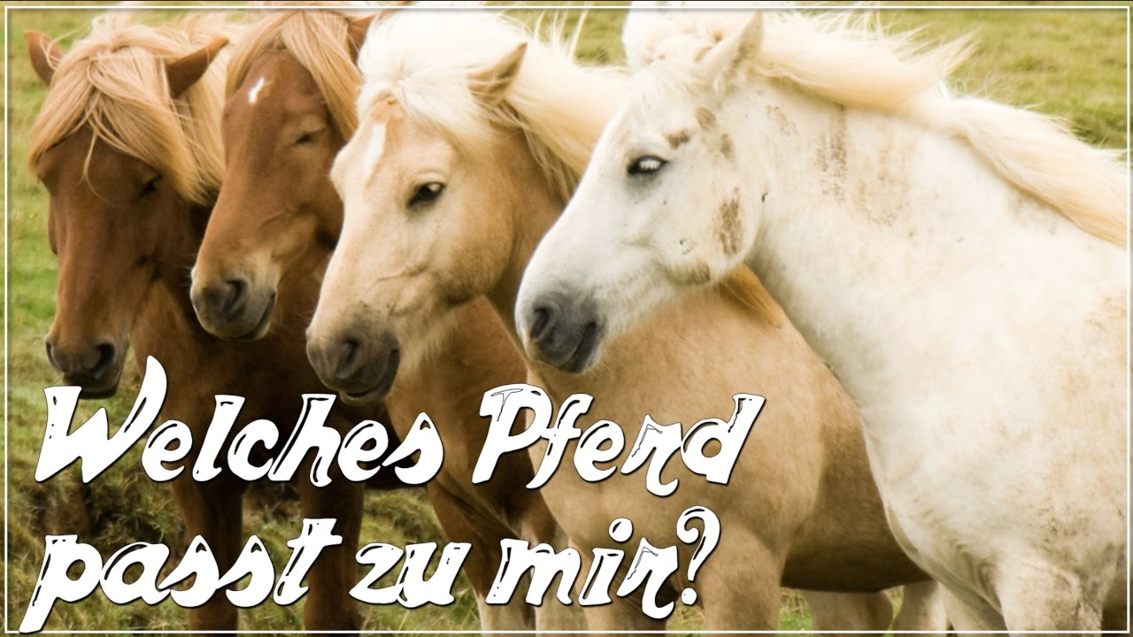 Welches Pferd Passt Zu Mir Anita Girlietainment Youtube