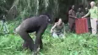 Was dieser Schimpanse macht Das musst du gesehen haben thumbnail