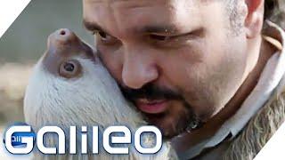 Medizin aus Faultierhaar - Warum diese Methode Leben rettet | Galileo | ProSieben