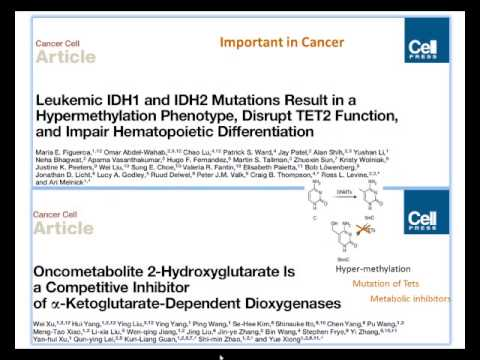 The New Epigenetic Modification: 5-Hydroxymethylcytosine -- What is its Function?' by Richard Meehan