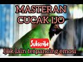 Masteran Burung Cucak Ijo Pasti Terpancing Emosi  Mp3 - Mp4 Download