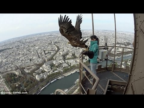 Camera strapped to eagle captures INCREDIBLE shots of Paris [NEWS FLASH]
