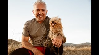 THE DOG WHISPERERS CESAR MILLAN LAUNCHES PET-CENTRIC SVOD SERVICE & LINEAR NETWORK