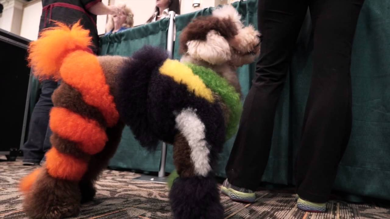 Creative dog grooming competitions turn pooches into art ...