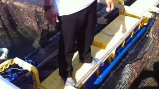 Panen kerapu di lombok