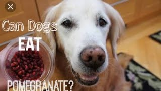 Can dog eat pomegranate??