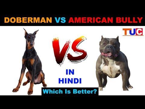 Doberman VS American Bully In Hindi : Dog Vs Dog : Dog Comparison : The Ultimate Channel