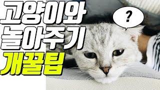 진돌의 고양이 놀아주기 -초급편-