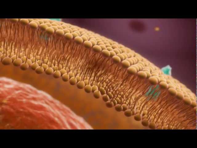 Vitamin K2 and Bone Metabolism