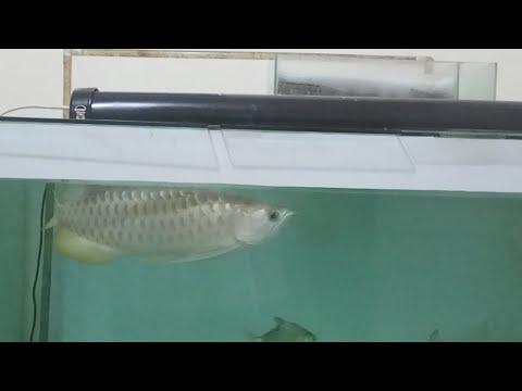 Harga Filter Aquarium Arwana Allcanwear Org