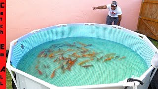 BUILDING 1,000 FISH CITY **Exotic Koi Fish in NEW Pool POND**